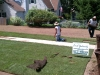 sod going down 2