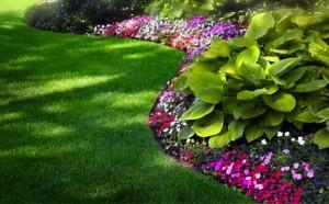 lawn-hostas