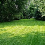 Fertilize your lawn to keep it growing in the fall