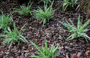 Mulch is beneficial in the garden