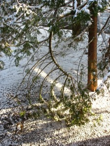 Snow can be rough and break tree branches