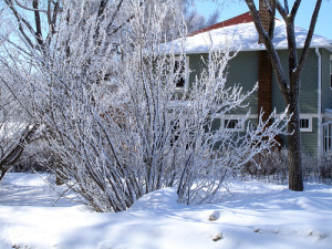WinterPrecipitationFlickrdaryl_mitchell