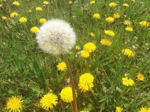 Use preemergent weed control to prevent more weeds from showing up