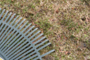 Spring Lawn Assessment Including Raking