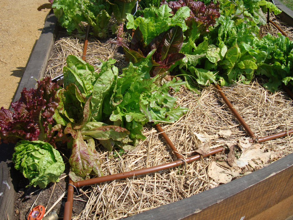 try drip irrigation for your trees, shrubs, vegetable