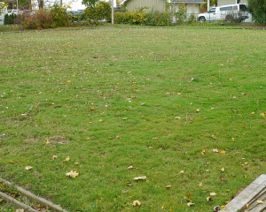 Work on lawn quality in the fall