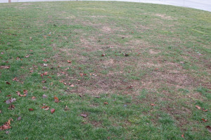 You may need to do a lawn renovation at the end of the growing season