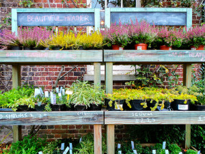 Visit your local garden center to get ready for renovating your planting beds