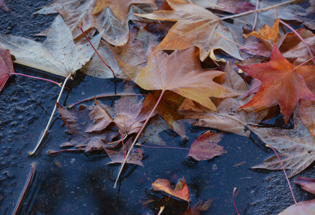 Raking up leaves is part of your final garden cleanup