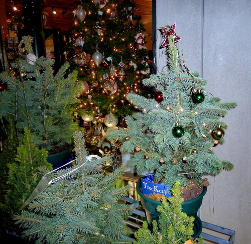 A live holiday tree can be a wonderful addition to your home decor.