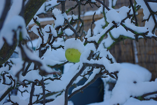Treat Your Fruit Trees and Shrubs with Dormant Oils