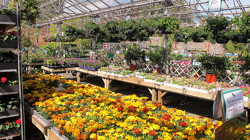 One place to buy plants is your local garden center