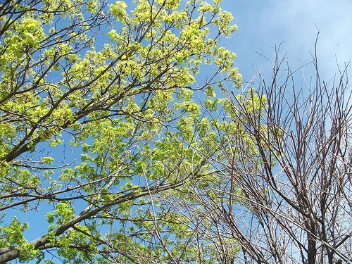 Is My Tree Still Alive?