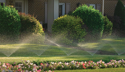 Proper Watering and Lawn Diseases