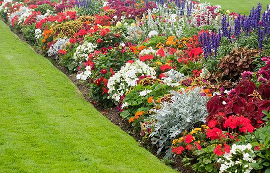 Seasonal Floral Displays