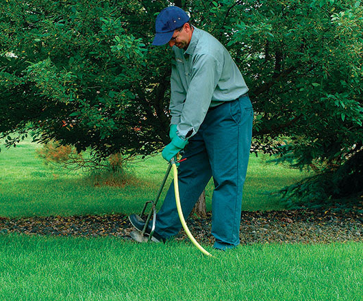 Root-Inject Your Ornamentals to Help Fight Decline