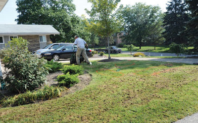 Lawn Remodeling
